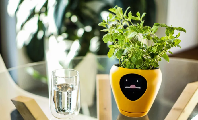 This Smart Planter Can Turn Your Plant Into A Virtual Pet