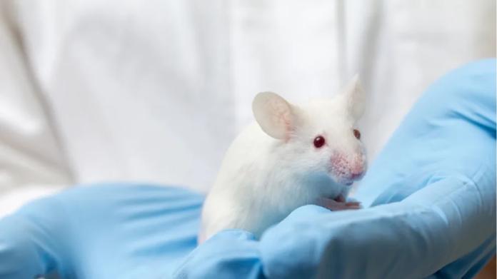 Researchers Discover Unique Sex-Specific Brain Cells In Mice